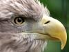eagle-eye-x2