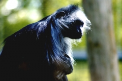 monkey001